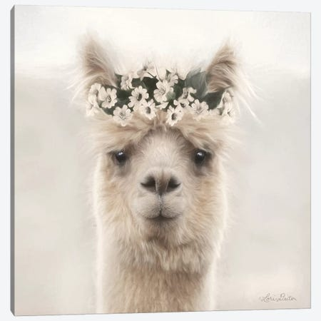Alpaca with Flowers Canvas Print #LOD77} by Lori Deiter Canvas Wall Art