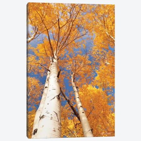 Aspen I Canvas Print #LOD7} by Lori Deiter Canvas Print