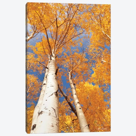 Aspen I Canvas Print #LOD7} by Lori Deiter Canvas Print