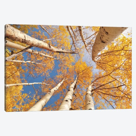 Aspen II Canvas Print #LOD8} by Lori Deiter Canvas Wall Art