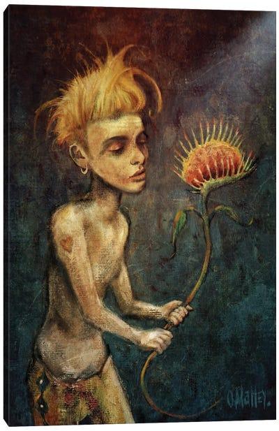 Venus As A Boy Canvas Art Print