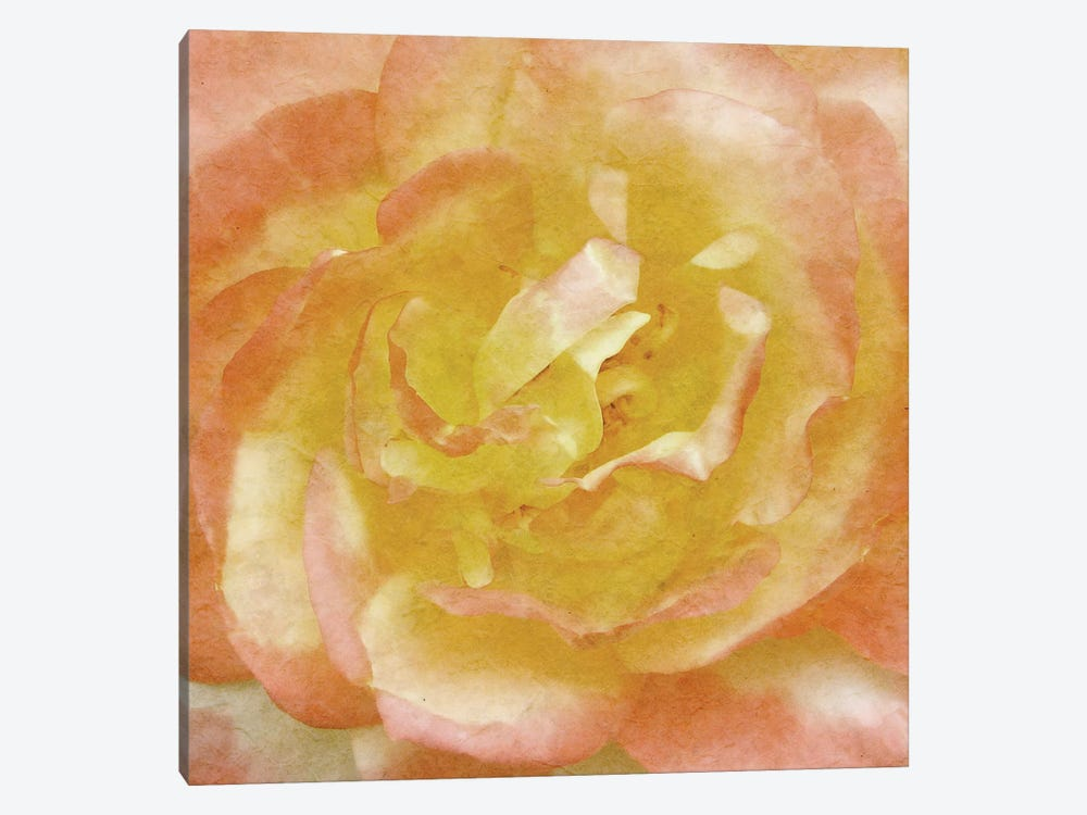 Wall Flower I by Alonzo Saunders 1-piece Canvas Wall Art