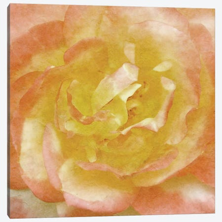 Wall Flower I Canvas Print #LON102} by Alonzo Saunders Canvas Art Print