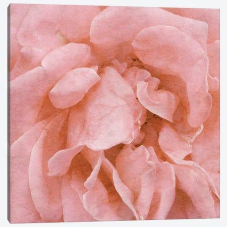 Wall Flower IV Canvas Print #LON105} by Alonzo Saunders Canvas Art