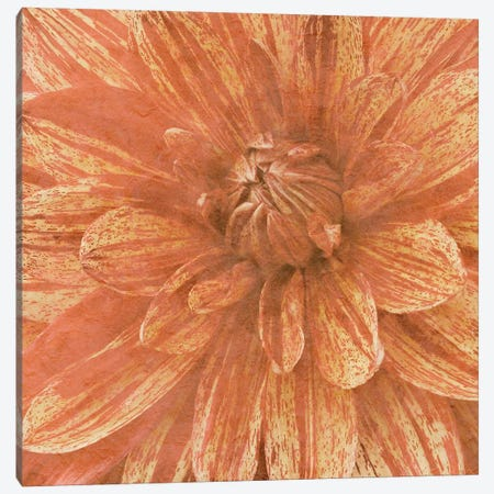 Wall Flower IX Canvas Print #LON106} by Alonzo Saunders Canvas Wall Art