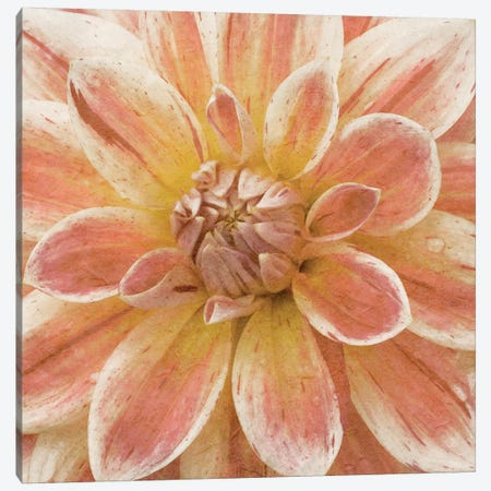 Wall Flower V Canvas Print #LON107} by Alonzo Saunders Canvas Artwork