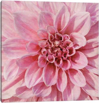 Wall Flower VII Canvas Art Print