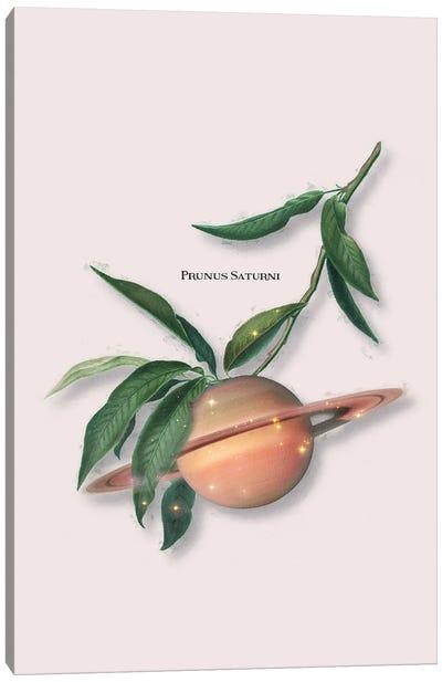 Saturn Fruit Canvas Art Print