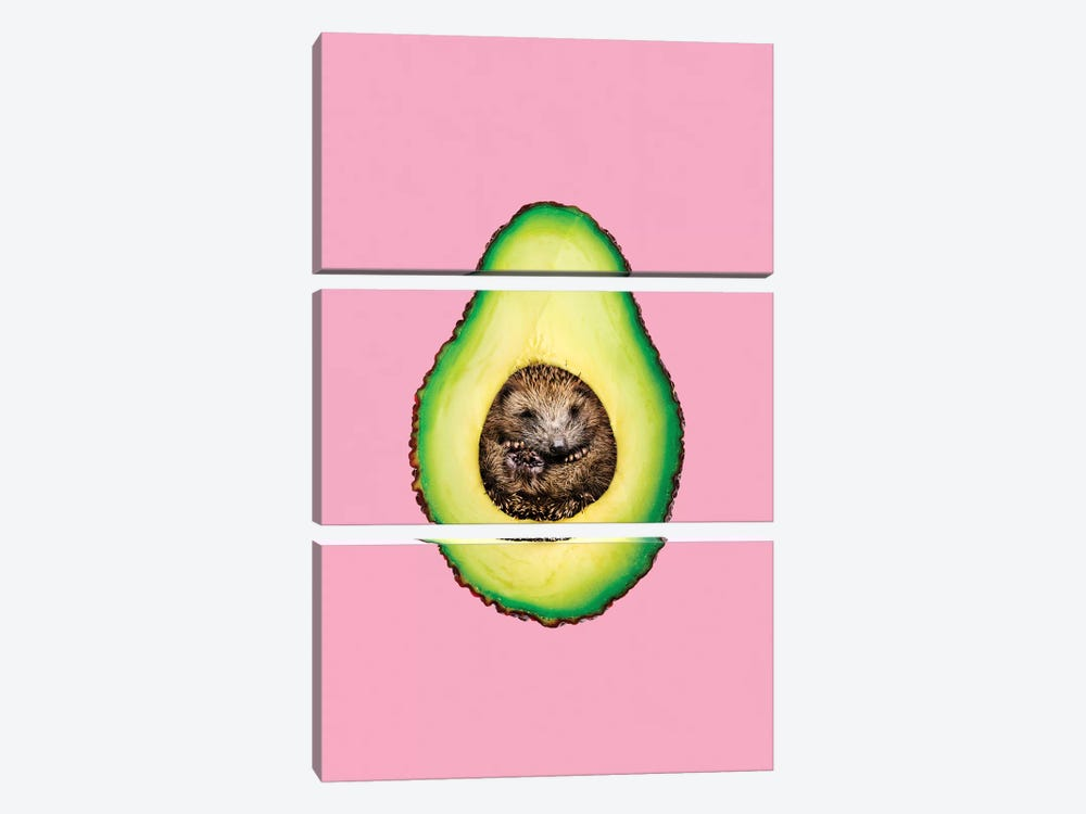 Hedgehocado 3-piece Canvas Print