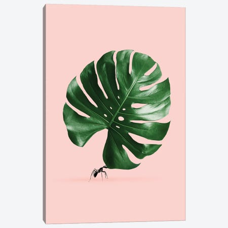 Monstera Ant Canvas Print #LOO23} by Jonas Loose Art Print