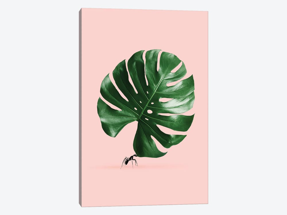 Monstera Ant by Jonas Loose 1-piece Canvas Art