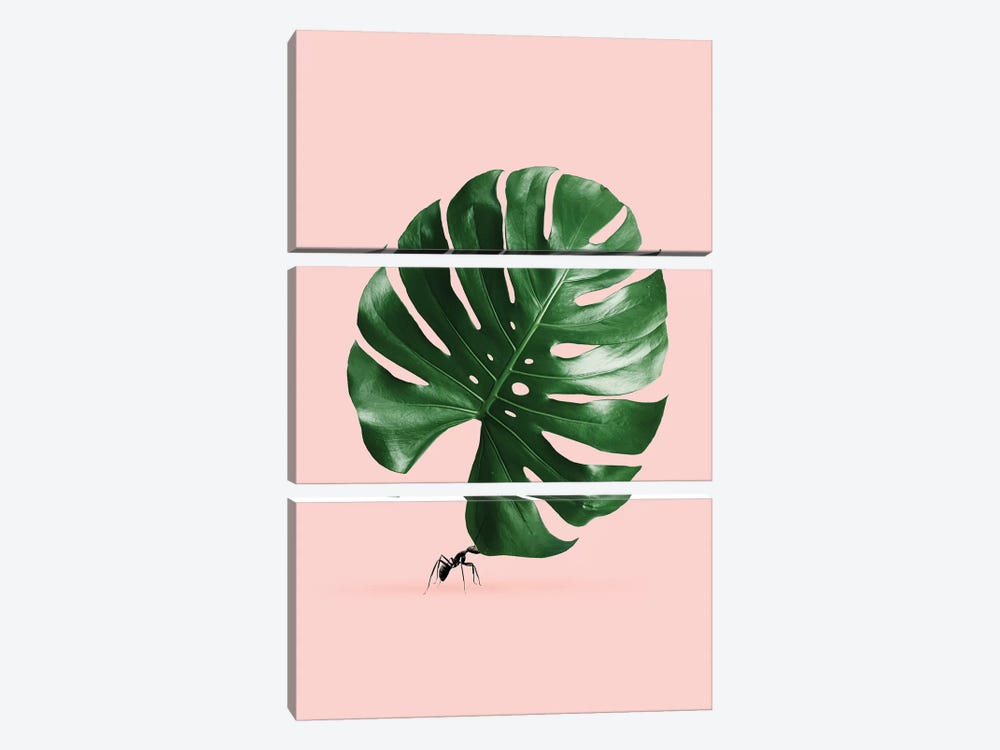 Monstera Ant by Jonas Loose 3-piece Canvas Wall Art