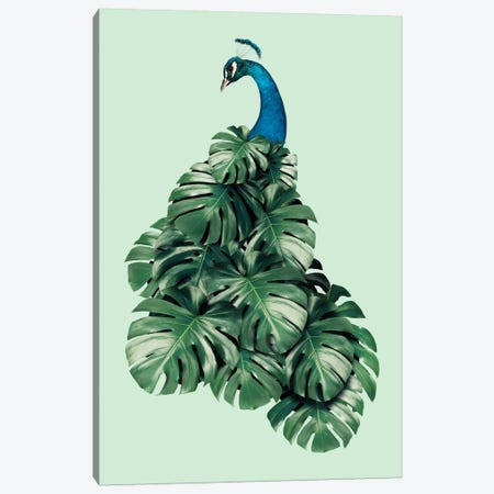 Monstera Bird Canvas Print #LOO24} by Jonas Loose Canvas Wall Art
