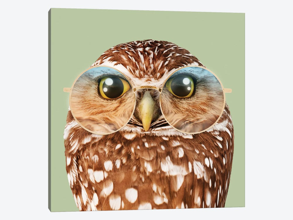 Owl With Glasses by Jonas Loose 1-piece Canvas Art