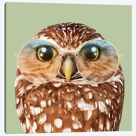 Owl With Glasses Canvas Print #LOO29} by Jonas Loose Canvas Art Print