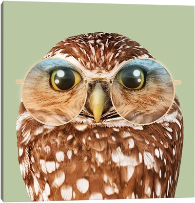 Owl With Glasses Canvas Art Print