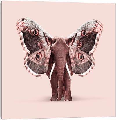 Papillophant Canvas Art Print