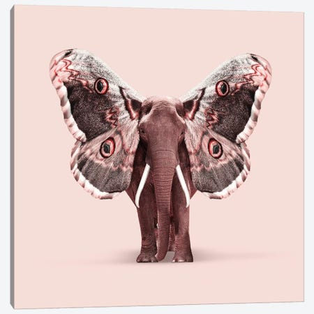 Papillophant Canvas Print #LOO31} by Jonas Loose Canvas Art