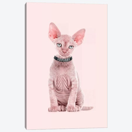 Pussy Love Canvas Print #LOO39} by Jonas Loose Canvas Artwork