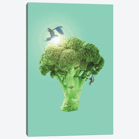 Broccoli Canvas Print #LOO3} by Jonas Loose Art Print