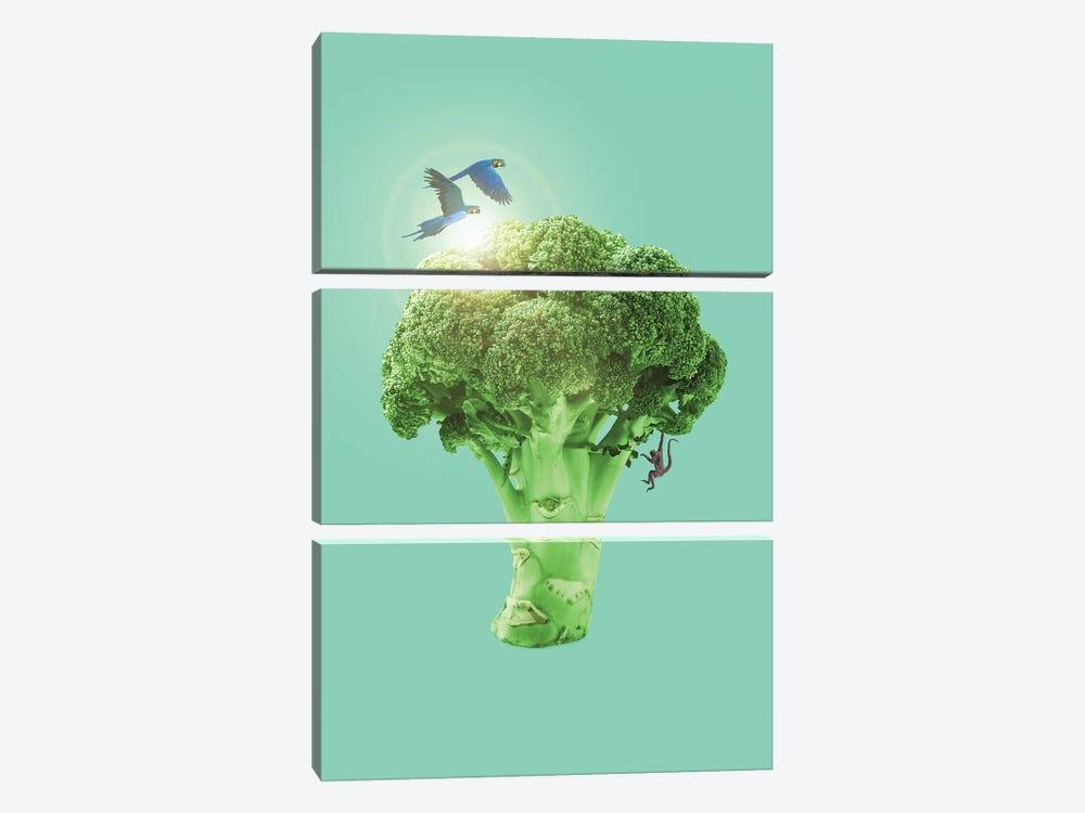 Broccoli by Jonas Loose 3-piece Canvas Wall Art