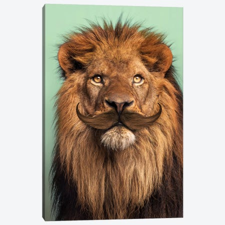 Bearded Lion Canvas Print #LOO56} by Jonas Loose Art Print