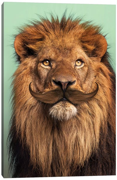 Bearded Lion Canvas Art Print