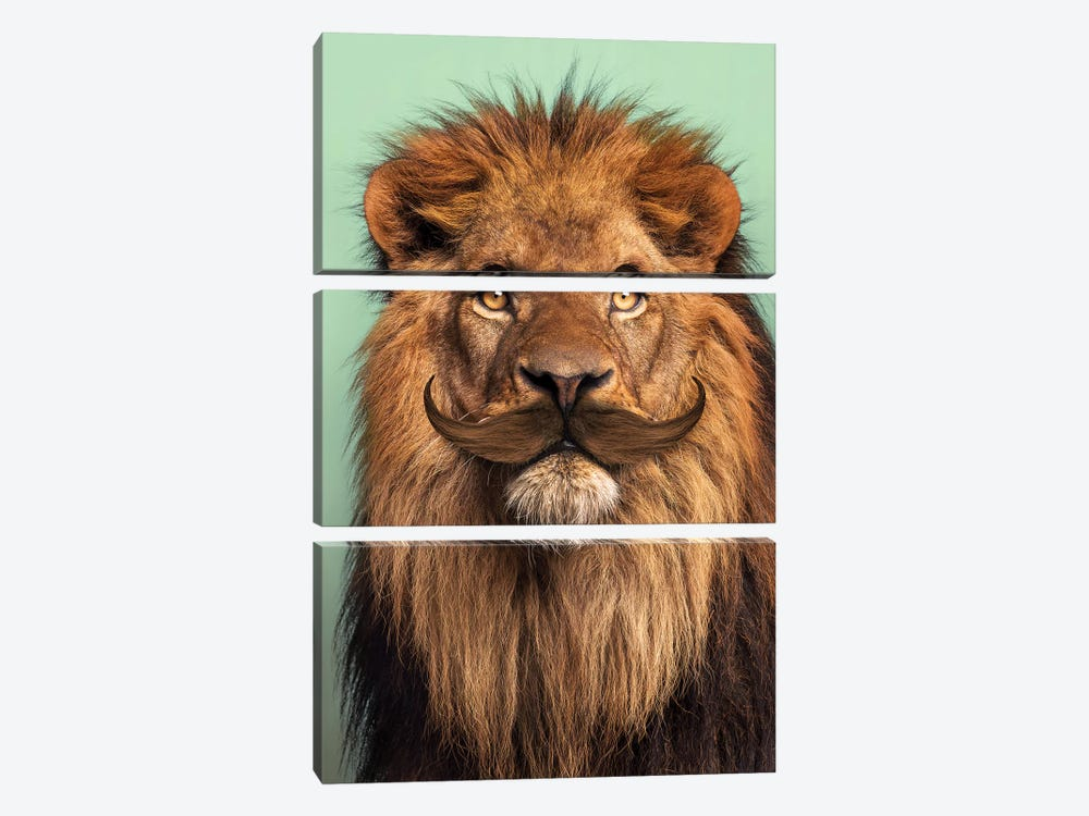 Bearded Lion by Jonas Loose 3-piece Canvas Artwork
