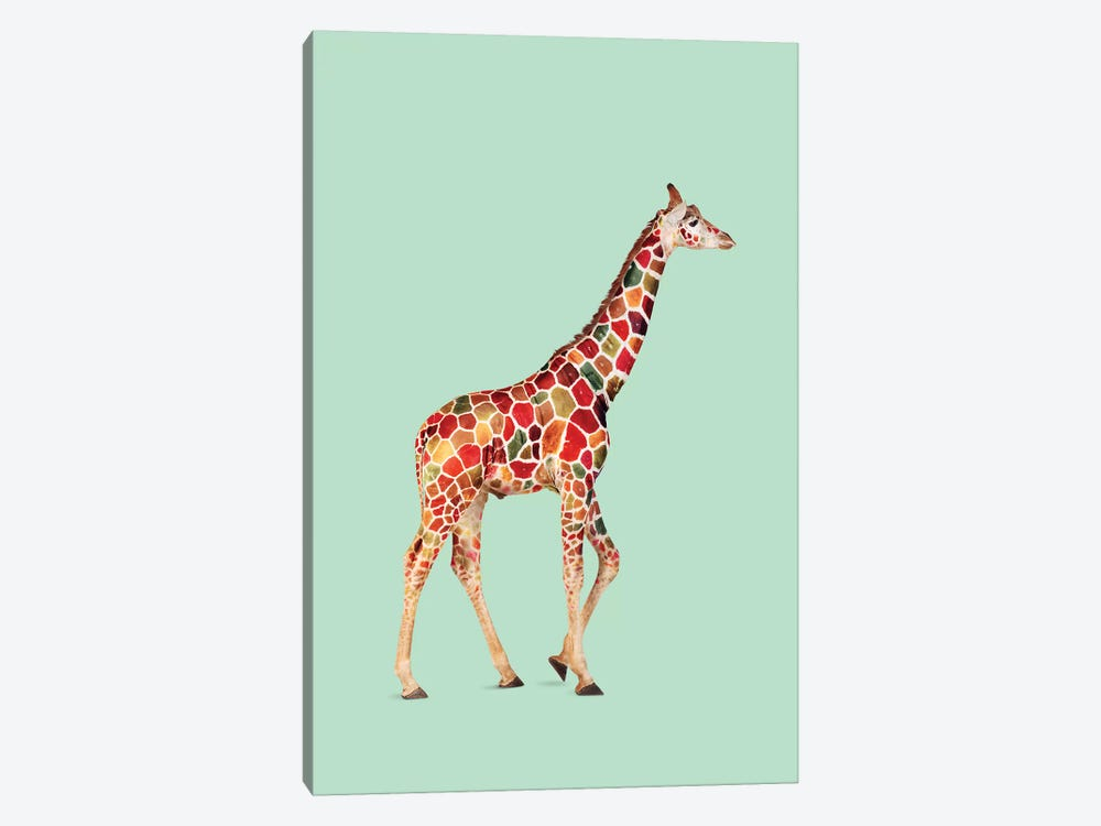 Colored Giraffe by Jonas Loose 1-piece Canvas Wall Art