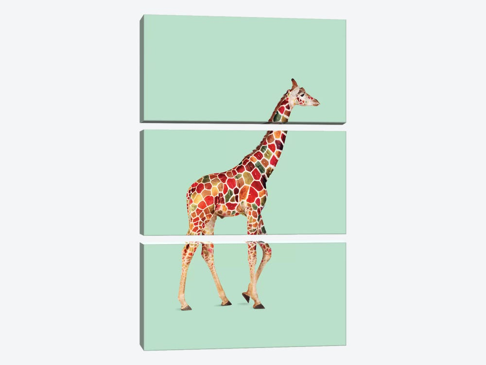 Colored Giraffe by Jonas Loose 3-piece Canvas Artwork