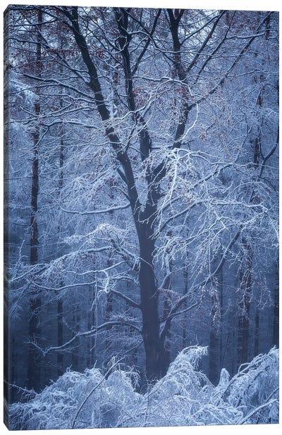 Frosty Opus Canvas Art Print