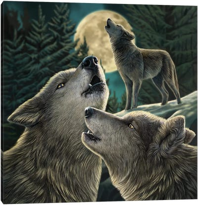 Wolf Song Canvas Art Print