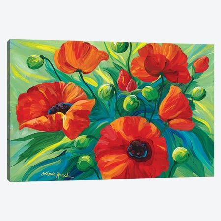 Oriental Poppies Canvas Print #LRA33} by Linda Rauch Canvas Art