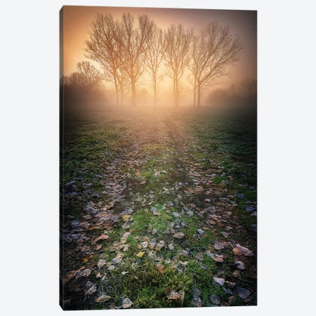Misty Morning Canvas Print #LRB1} by Luca Rebustini Canvas Art Print