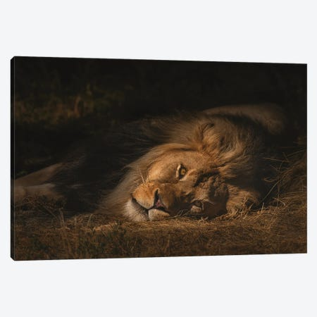 The King Canvas Print #LRH111} by Louis Ruth Canvas Print