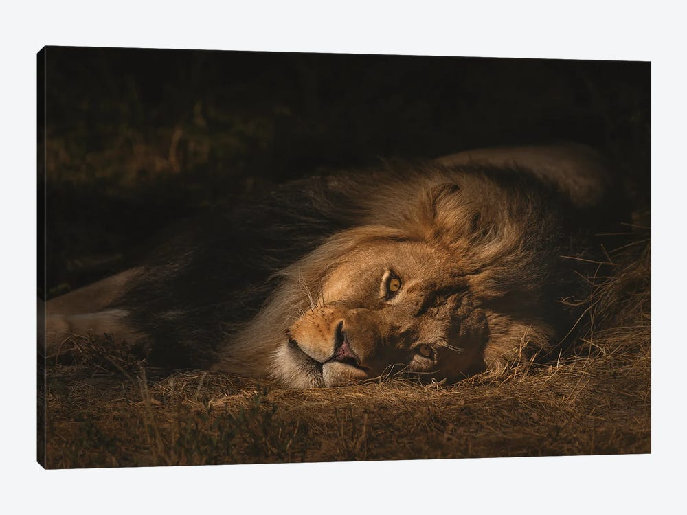 The King by Louis Ruth 1-piece Canvas Print