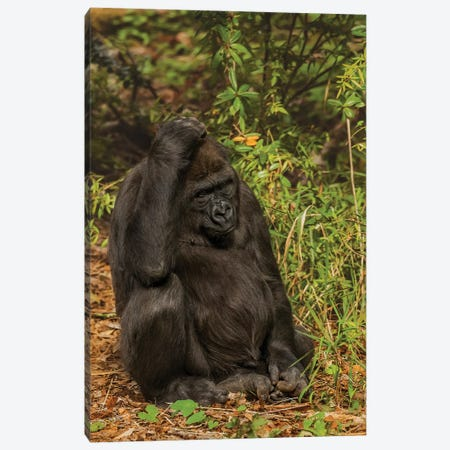 Thinking About It Canvas Print #LRH112} by Louis Ruth Canvas Print