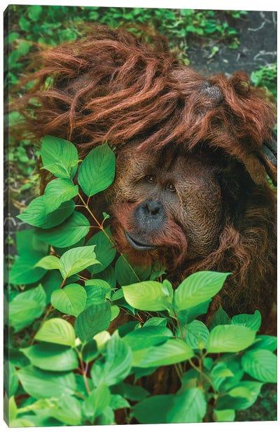 Hiding Orangutan Canvas Art Print
