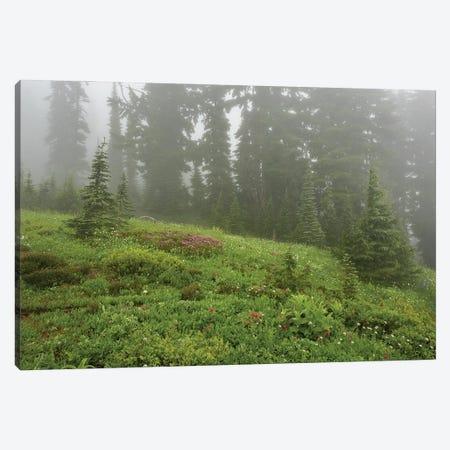 Misty Meadows Canvas Print #LRH146} by Louis Ruth Canvas Print