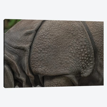 Rhino Lining Canvas Print #LRH160} by Louis Ruth Canvas Artwork