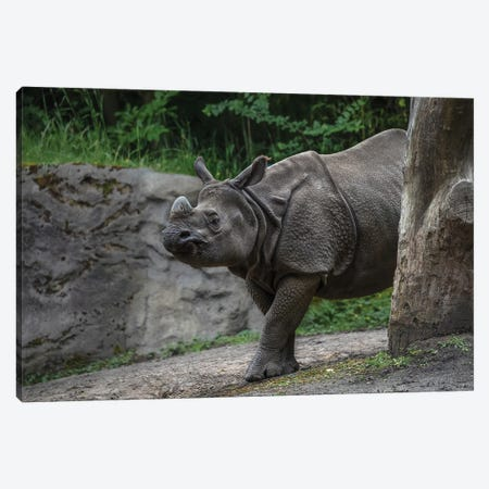 Rhino Scratching Canvas Print #LRH162} by Louis Ruth Canvas Wall Art