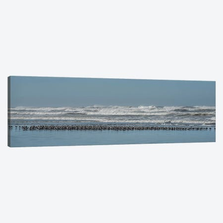 Sand Pipers In A Row Canvas Print #LRH163} by Louis Ruth Canvas Art