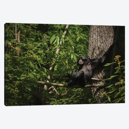 Monkey With Arms Stretched Out In A Tree Canvas Print #LRH170} by Louis Ruth Art Print