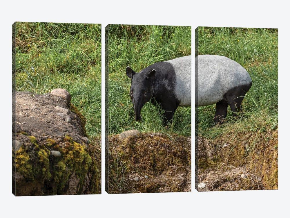 Tapir by Louis Ruth 3-piece Art Print