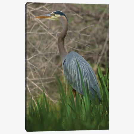 Blue Heron On The Hunt Canvas Print #LRH189} by Louis Ruth Canvas Artwork