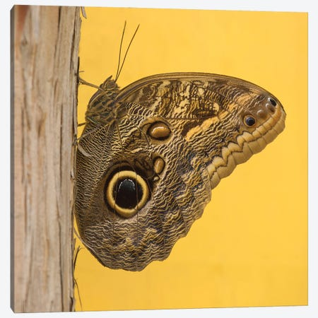 Solo Butterfly Canvas Print #LRH193} by Louis Ruth Canvas Print