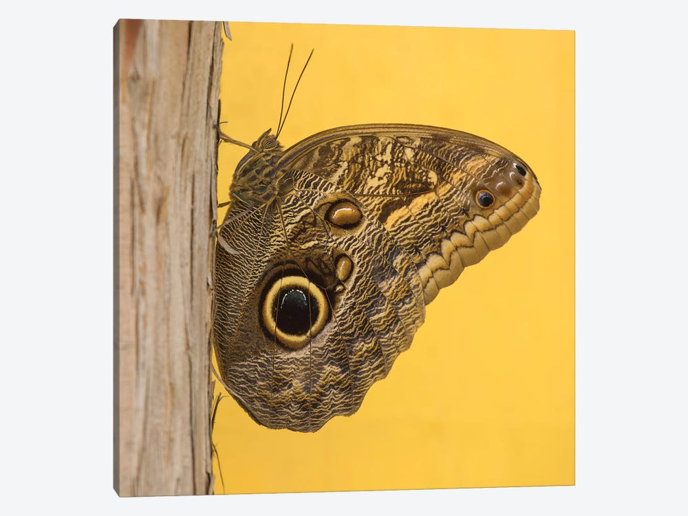 Solo Butterfly by Louis Ruth 1-piece Art Print