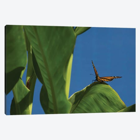 Butterfly On A Leaf Blue Sky Canvas Print #LRH194} by Louis Ruth Canvas Wall Art