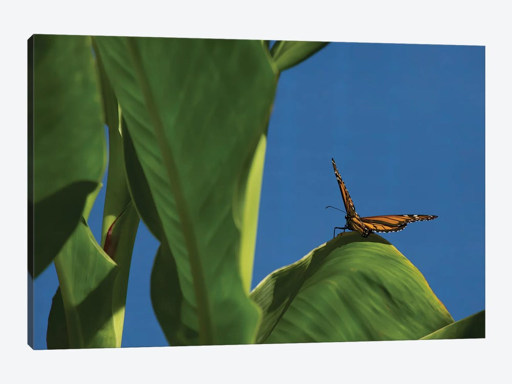 Butterfly On A Leaf Blue Sky by Louis Ruth 1-piece Canvas Art