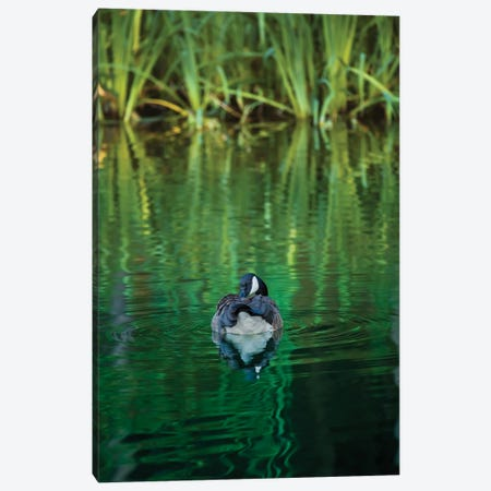 One Emerald Night (Wrong Title>Cormorant Night Swim) Canvas Print #LRH19} by Louis Ruth Canvas Art Print